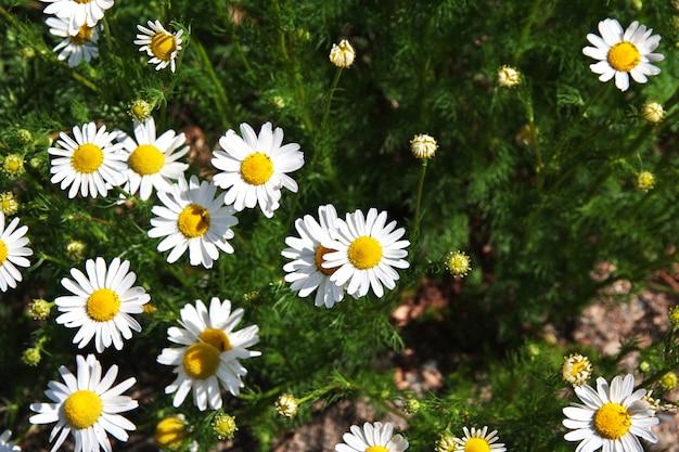 Quelques fleurs à laguna nimez reserva à el calafate, patagonie, argentine