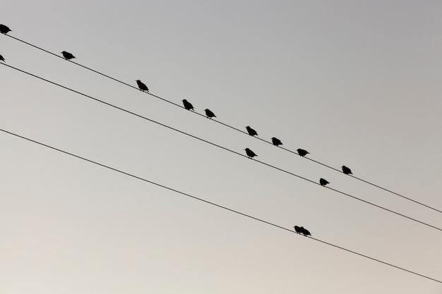 Quelques petits oiseaux se reposent, assis sur les lignes de poteaux électriques à haute tension contre le ciel. photographié en gros plan en bas.