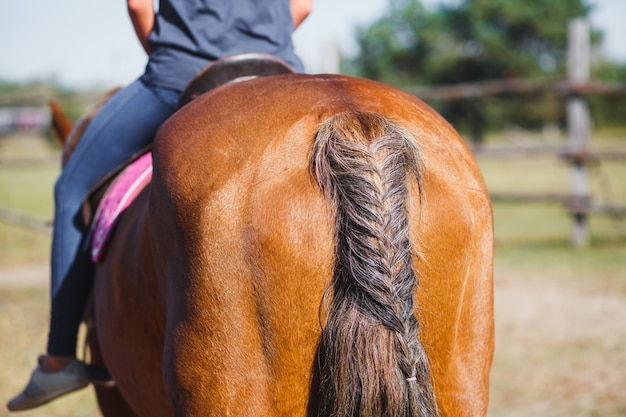 Queue de cochon ou décoration d'un cheval de sa queue