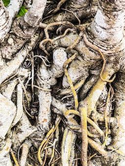 La racine de l'arbre