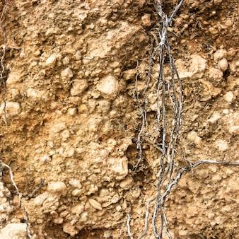 Racine dans le sol