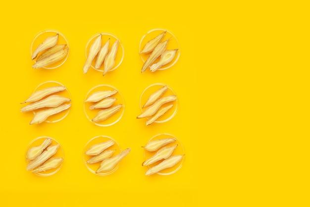 Racine de doigt sur fond jaune.