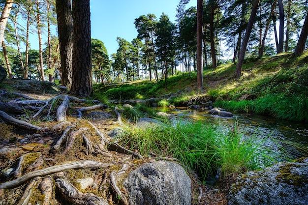 Racines d'arbres au sol avec de grosses pierres et un jet d'eau transparent.