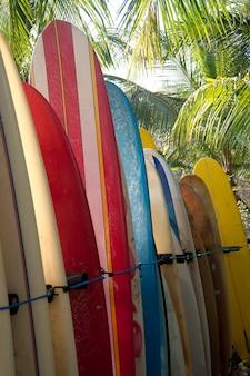 Rack de planches de surf multicolores rayées stockées à la plage dans une forêt de palmiers