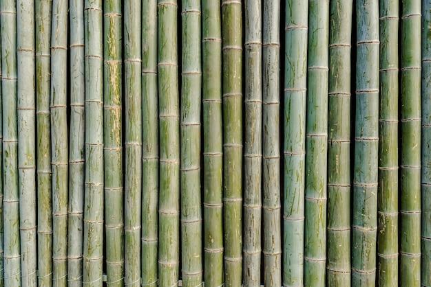 Radeau en bambou