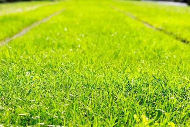 Rail de tram avec une herbe verte fraîche par temps ensoleillé.