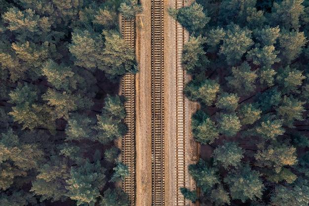 Rails sur traverses au milieu d'une forêt verte le soir