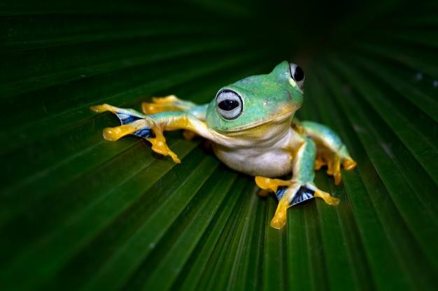 Rainette sur feuilles vertes, rainette sur feuilles