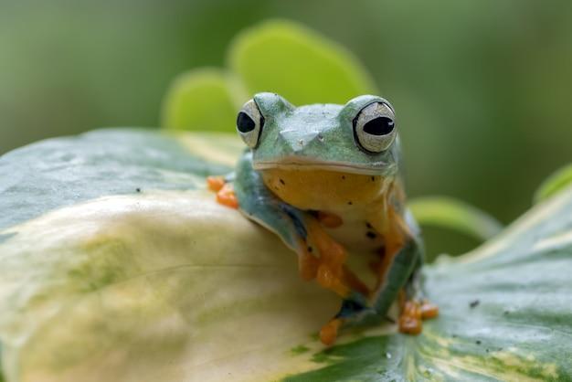 Rainette verte perchée sur une feuille