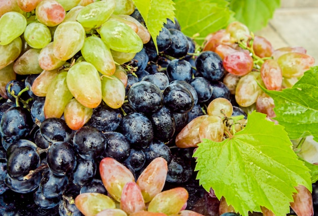 Les raisins. aliments. mise au point sélective. bio nature bio.