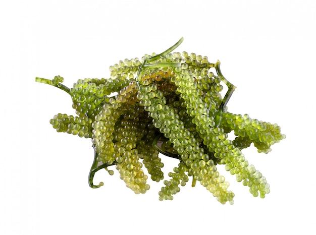 Raisins de mer (caviar vert) algues