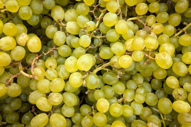 Raisins verts bouchent, arrière-plan. variété de raisins frais cultivée dans la boutique. raisins adaptés au jus, strudel, purée de raisin, compote, vin