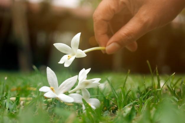 Ramassez les fleurs dans le jardin qui tombent sur l'herbe.