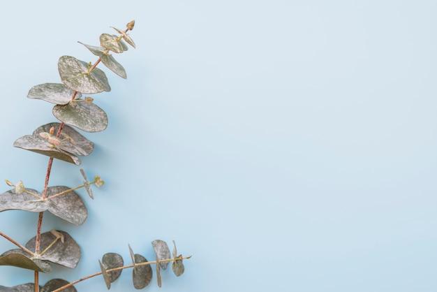 Rameau de plante verte feuillue