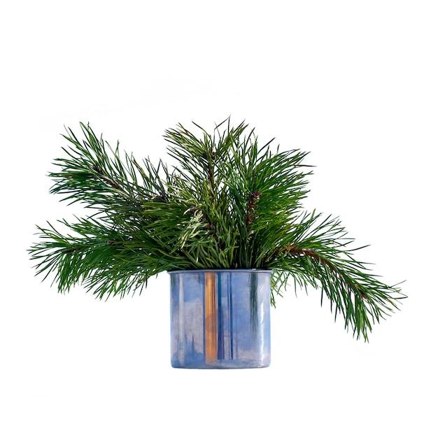 Rameaux de pin isolés dans une tasse en fer. rameaux de conifères pour la décoration. hiver nature morte isolé sur fond blanc.