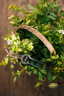 Rameaux de plantes vertes et sécateur de jardin dans un panier
