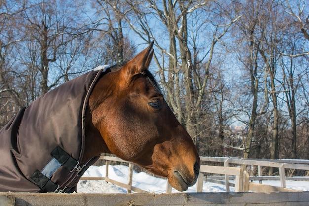 Randonnée à cheval dans le paddock de neige en hiver