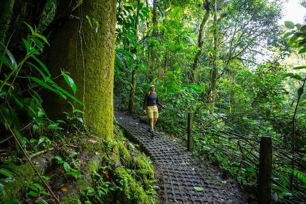 Randonnée dans la jungle tropicale verte, costa rica, amérique centrale
