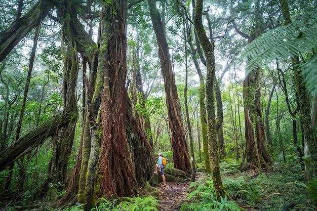 Randonneur sur le sentier dans la jungle verte, hawaii, usa