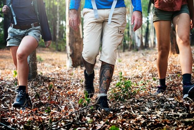 Randonneurs marchant dans la forêt