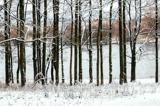 Une rangée d'arbres enneigés au bord de la rivière, paysage d'hiver