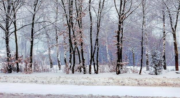 Rangée d'arbres enneigés dans le parc d'hiver_