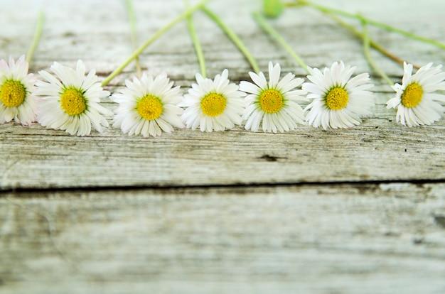 Rangée de daces sur une planche en bois blanche avec espace copie vide pour le texte. fleur de printemps sauvage.