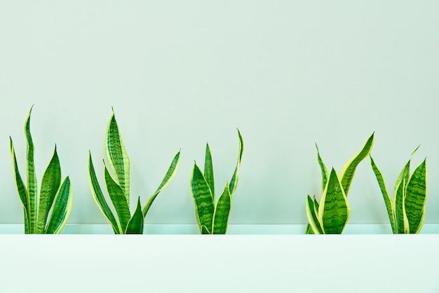 Une rangée de feuilles vertes sur le fond d'un mur de lumière.