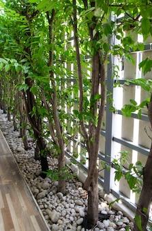 La rangée fraîche de wrightia religiosa benth dans le petit jardin le long de la clôture de la maison de ville