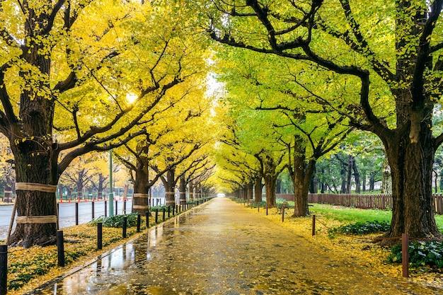 Rangée de ginkgo jaune en automne. parc d'automne à tokyo, japon.