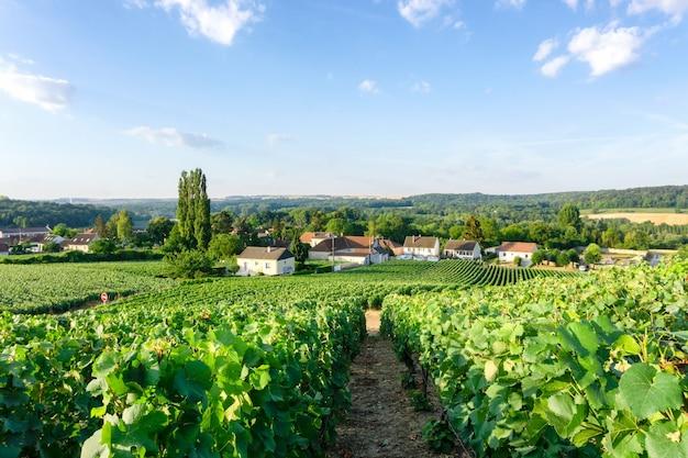 Rangée de raisin de vigne dans les vignobles de champagne à la montagne de reims campagne fond de village, reims, france