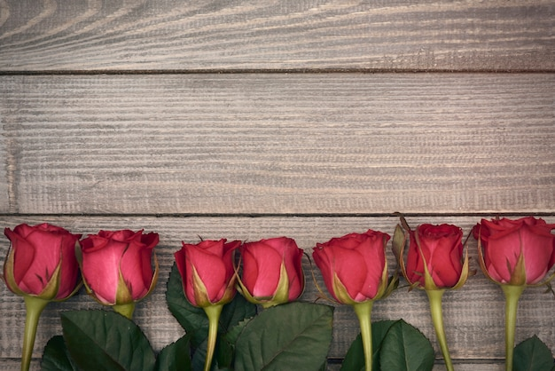 Rangée de roses coupées rouges