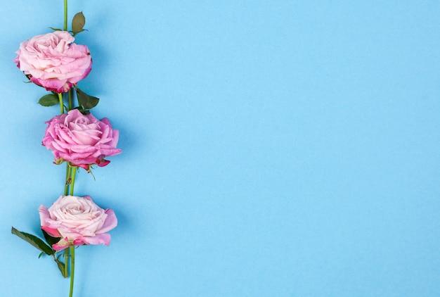 Rangée de roses roses disposées au-dessus du fond bleu