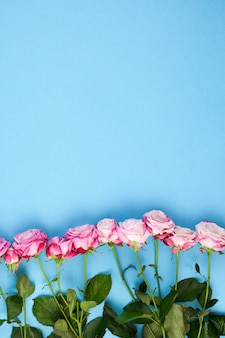 Rangée de roses roses et de feuilles vertes disposées sur un fond bleu