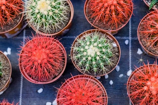 Rangées de différentes plantes succulentes dans le magasin de jardin