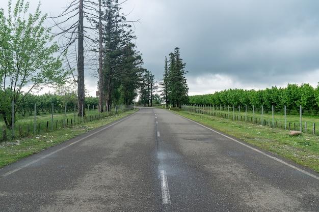 Rangées de plantation de noisettes dans la région de samegrelo