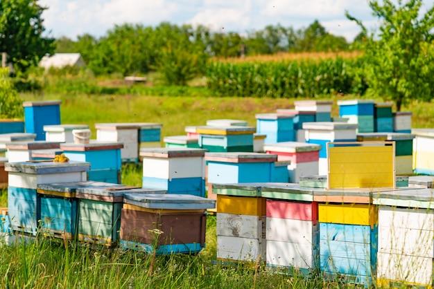 Des rangées de ruches colorées se tiennent dans le jardin en été