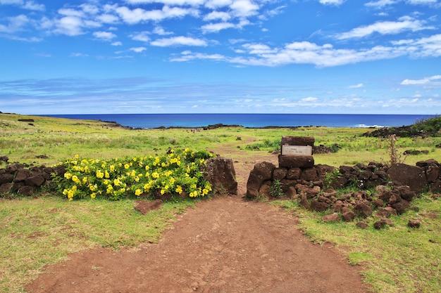 Rapa nui. fleurs jaunes sur l'île de pâques, chili
