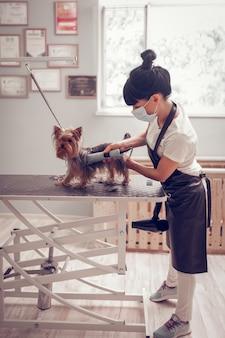 Rasage chien mignon. jeune femme brune travaillant dans un salon de toilettage rasant un petit chien mignon