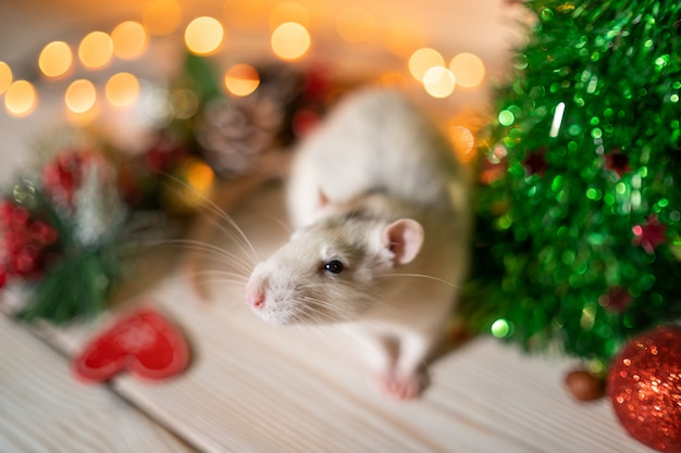 Rat blanc sur un arbre de noël