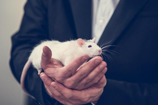 Un rat blanc dans les bras d'un homme en veste