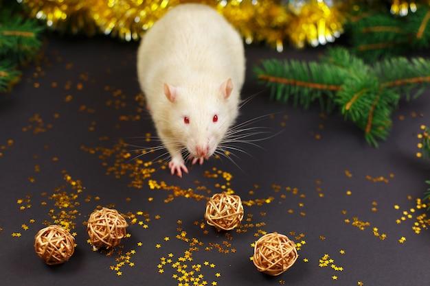 Rat blanc mignon à noël