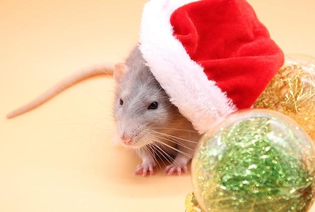 Un rat dans un chapeau de noël. bonne année