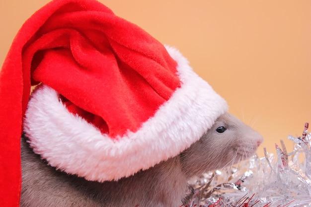 Un rat dans un chapeau de noël.