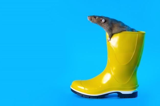 Rat décoratif dans une botte en caoutchouc jaune vif. année du rat