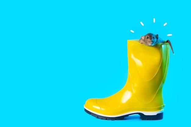 Rat décoratif dans une botte en caoutchouc jaune vif sur fond bleu. symbolise l'automne et l'année du rat