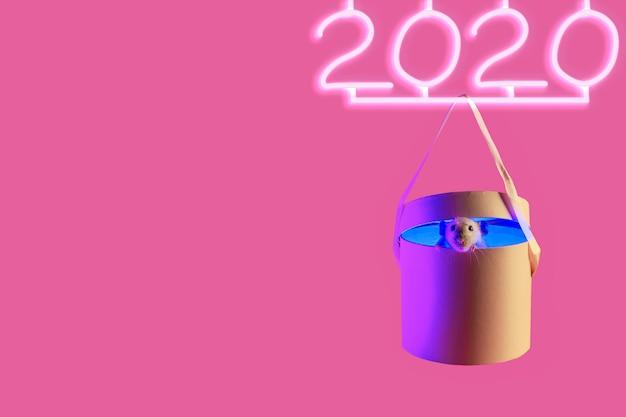 Rat décoratif mignon dans le cadeau et 2020 enseigne au néon avec ombre sur rose
