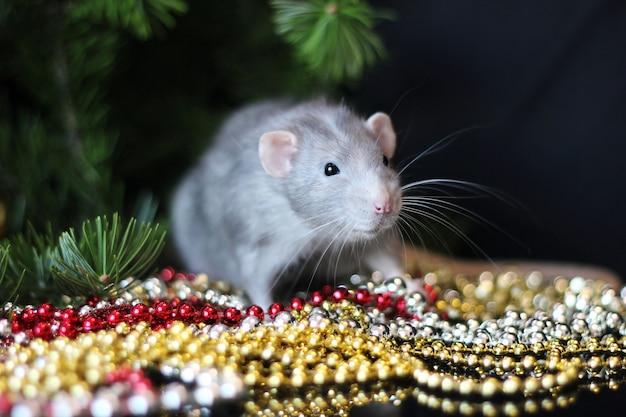 Rat domestique gris sur une branche d'un arbre de noël.