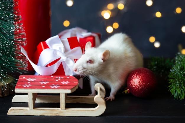 Rat domestique mignon dans un décor du nouvel an.