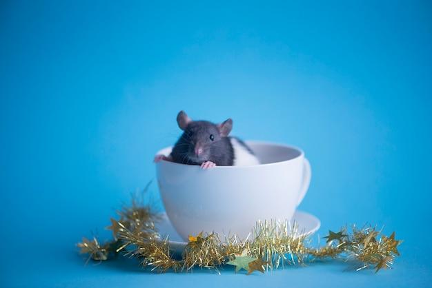 Rat domestique mignon dans une tasse de café blanc isolé sur bleu. concept de la nouvelle année 2020.